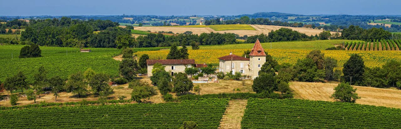 Armagnac vineyards (Gers)